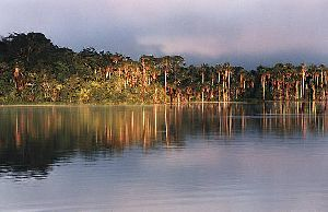 Lago Sandoval Canopy