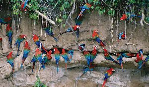 Parque Nacional del Manu Zona Reservada 7d