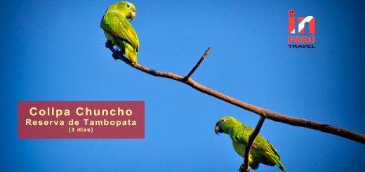 Collpa Chuncho - Reserva Nacional Tambopata Candamo